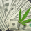 Dealing in Green: What You Need to Know to Invest in Cannabis Stock